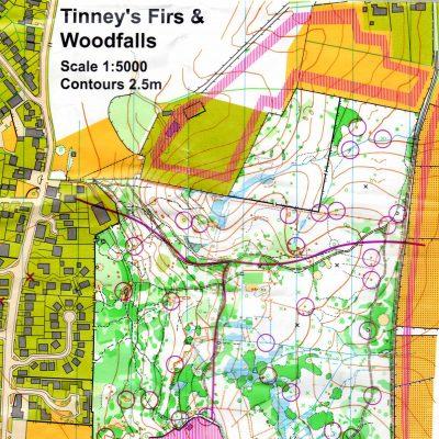 Tinney's Firs